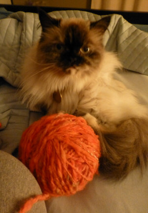 Cats Love Yarn: Here's Proof.
