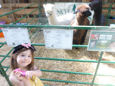 Posing with the adorable babies from Skyeview Alpacas