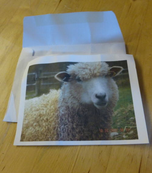 photo included in one of my bags of raw wool from a small New England producer